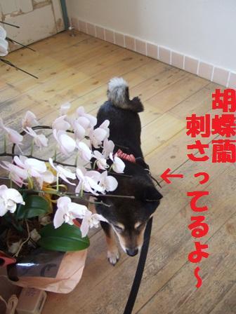 blog5259.jpg