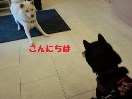 blog5279.jpg