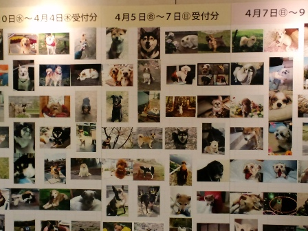 blog5314.jpg