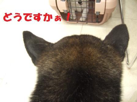 blog5636.jpg