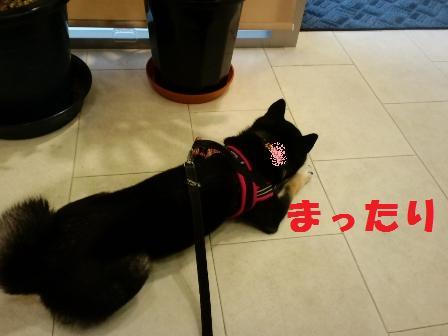 blog5758.jpg