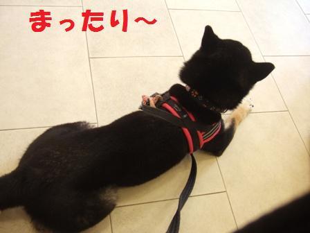 blog5781.jpg