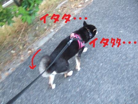 blog5808.jpg