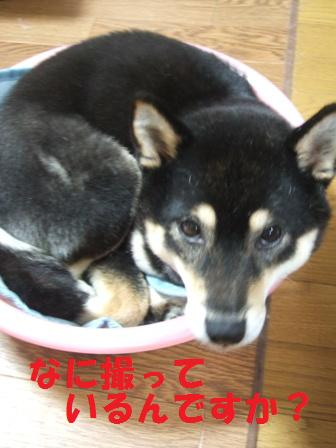 blog5912.jpg