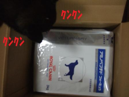 blog5919.jpg