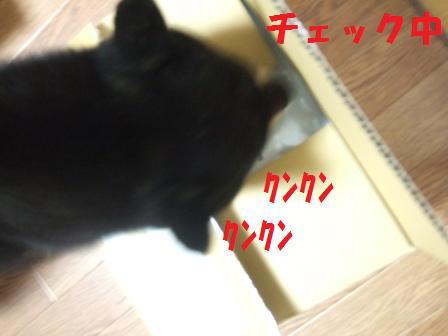 blog5923.jpg