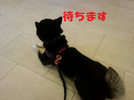 blog5971.jpg