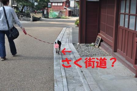 blog6103.jpg