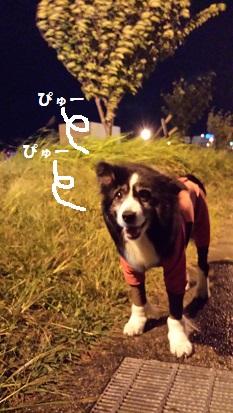 20141013_203948.jpg