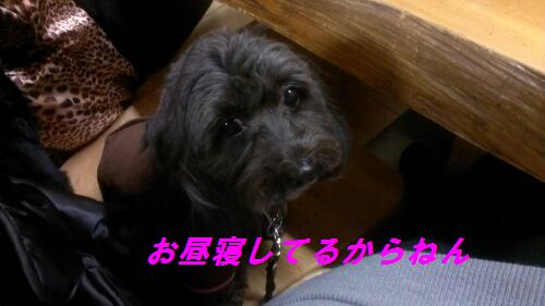 IMG_2013011223770.jpg
