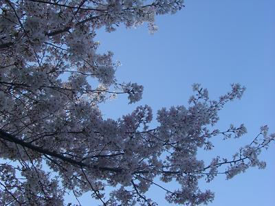桜と空。。。