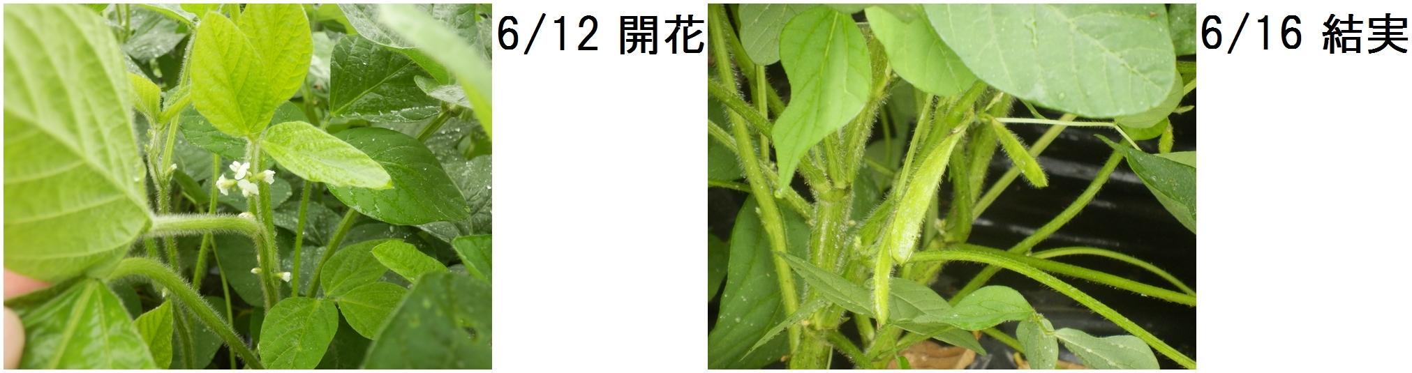 開花-horz