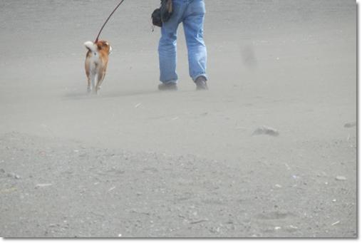 砂浜のさくら2
