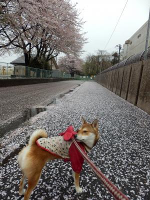 雨のお散歩3