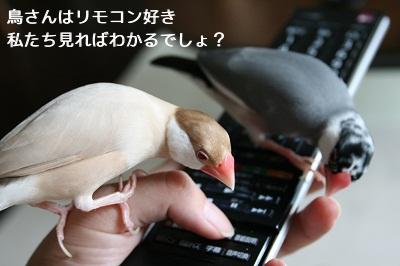 20110721_1422a.jpg