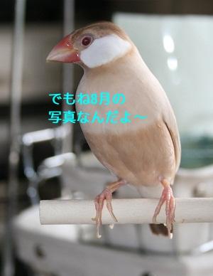 20110826_1591.jpg