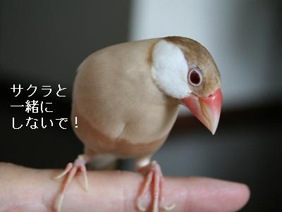 20110827_1607.jpg