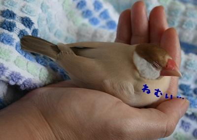 20111001_1709.jpg