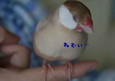 20111001_1727.jpg