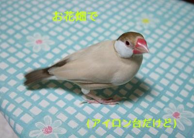 20111029_1891.jpg