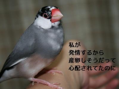 20111105_1922.jpg