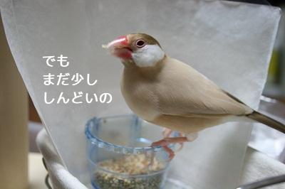 20111105_1931.jpg