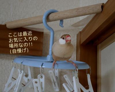 20111217_2095.jpg
