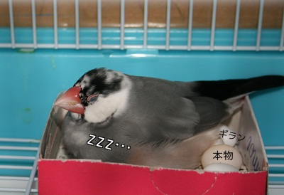 20111223_2120.jpg