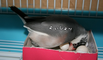 20111223_2123.jpg