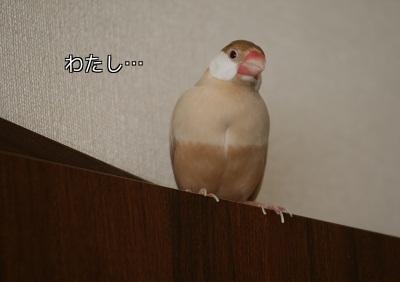 20120112_2222.jpg