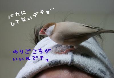 IMG_20111123_1716.jpg