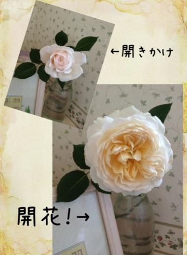 image_20130628051114.jpg