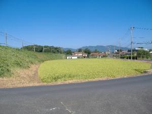 2011_0901kyou1_co.jpg