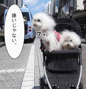 IMG_3073.jpg