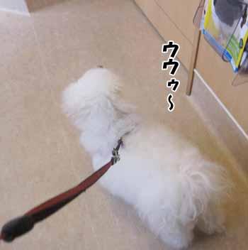 IMG_4051.jpg