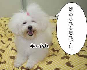 IMG_6506.jpg
