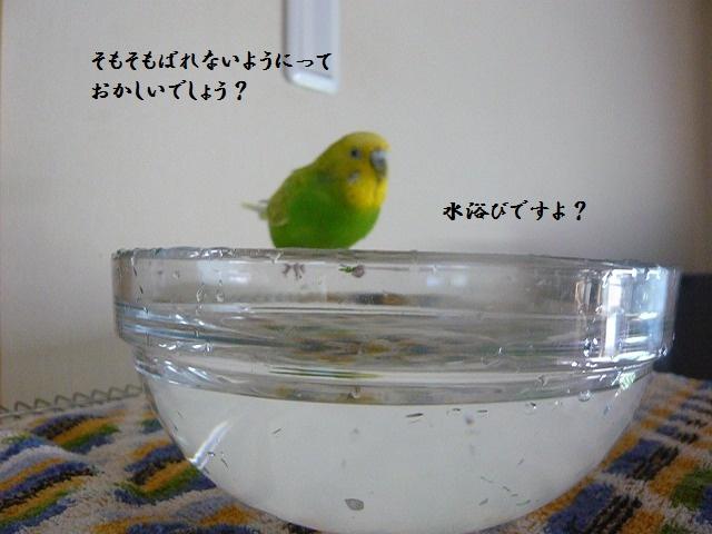 s-P1290021.jpg