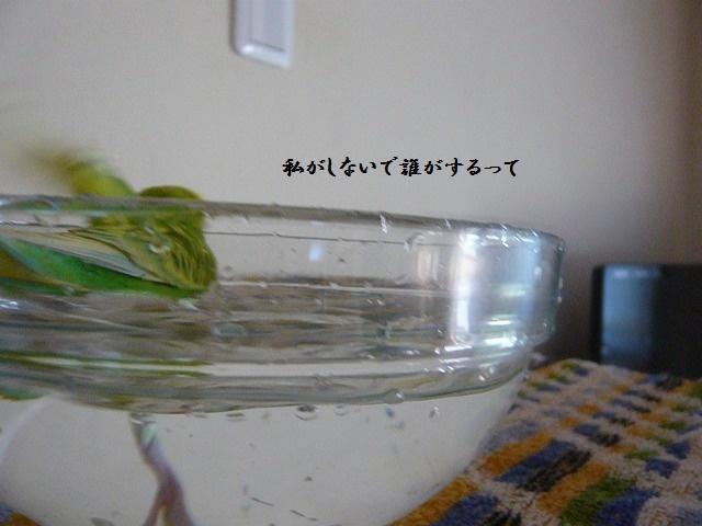 s-P1290028.jpg