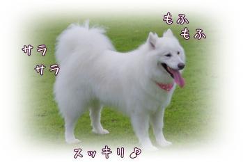 IMGP7133.jpg