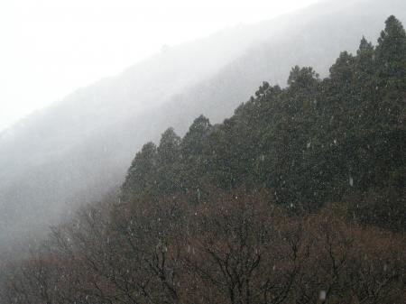 ケヤキの森 大雪
