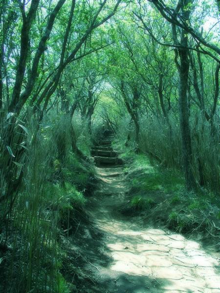 迷いの森へ
