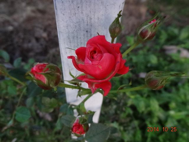 DSC00050_201410262020121e9.jpg