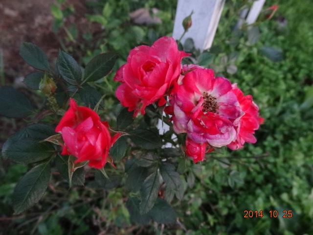 DSC00051_20141026202014e30.jpg