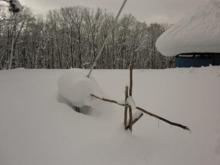 雪と物干し