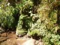 藤八の滝2