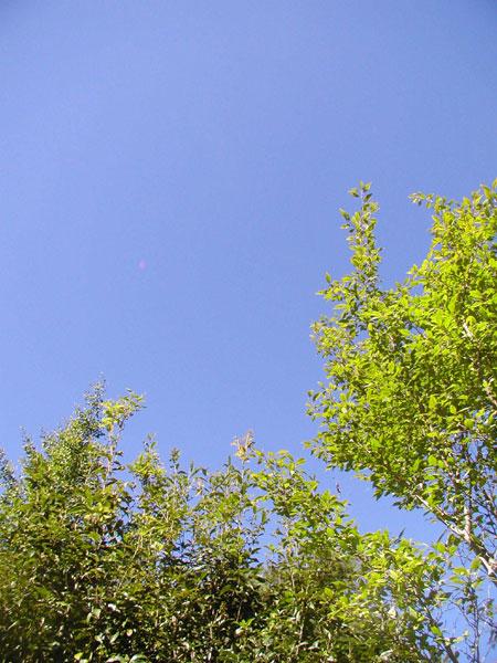 20109251.jpg