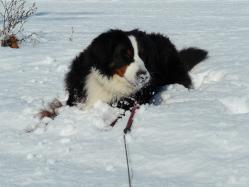 あの~、鼻に雪がついてますけど・・・・・(^_^;)