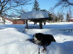 公園の「あずまや」にもすごい雪。