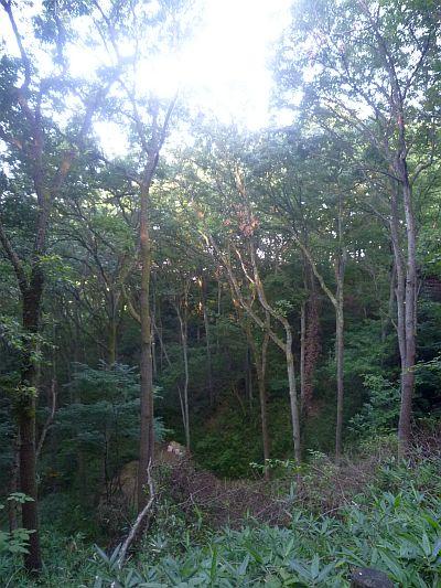 自由の森 なるかわ