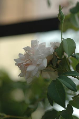 carriere2011816.jpg